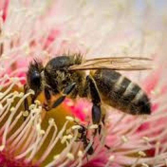 Profile picture of Erriba Property Owners Seek Honey Bee Site Partners - storyID 4900